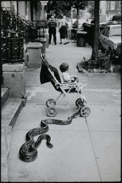 Leonard Freed, Pet Snake, New York City, 1985