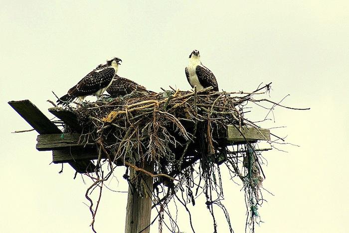 osprey sm