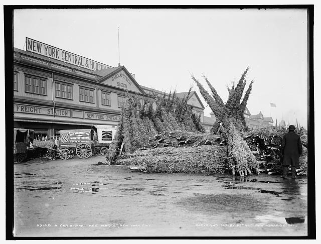 Targ z choinkami świąteczymi, 1910 r.