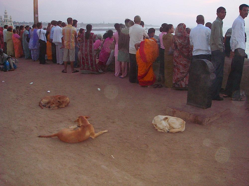 Rozczarowani turyści i bezdomne psy (jest ich w Indiach zaraz po żebrakach najwięcej)
