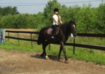 Daisy – sześcioletnia  klacz rasy śląskiej typu pogrubianego. Zdjęcie przedstawia mnie oraz Daisy podczas treningu do Brązowej Odznaki Jeździeckiej.