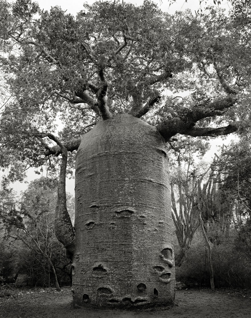 ancient-trees-beth-moon-11