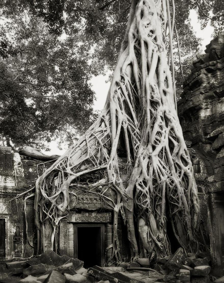 ancient-trees-beth-moon-13