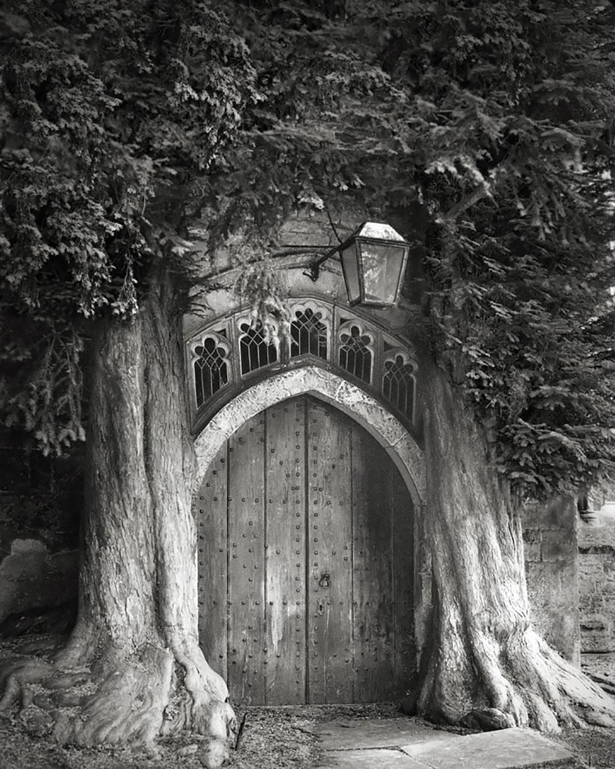 ancient-trees-beth-moon-6